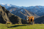 Climate Chains: Follow The Science, Not Emotion, Says NZ Farmer